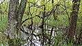 Swamp Vegitation.jpg