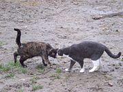 Rencontre entre deux chats.