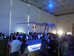 Fossil collecting - A Tarbosaurus specimen that was illegally smuggled to the US, and subsequently returned to Mongolia
