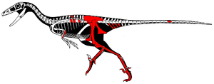 Talos (dinosaur) - Skeletal restoration of the holotype by Scott Hartman, with known parts shown in red