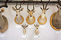 Taxidermied horned animal heads.jpg