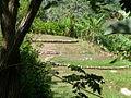 Tayronaka. Aménagement de l'emplacement des huttes.JPG