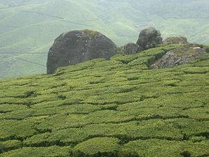 Tata Global Beverages - Tata's tea plantations in Munnar, India