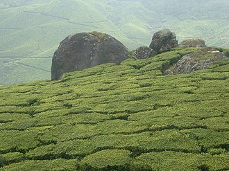 Tata Global Beverages - Tata's tea plantations in Munnar, India