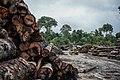 Terra Indígena Pirititi, Roraima (42460706681).jpg