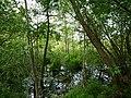 Teufelsbruch swamp next to crossing path in summer 10.jpg