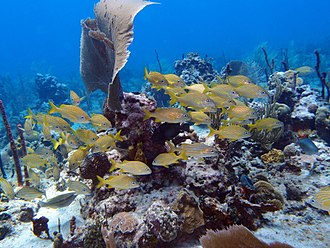 Catalina Island (Dominican Republic) - The Aquarium, Catalina Island