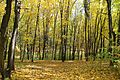 The Autumn - panoramio.jpg