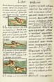 The Florentine Codex- Birds and Fish II.tif