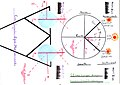The Ground Track of the Sun and the Conjugate Eye Movement. Released By Dr. Emad Kayyam.jpg