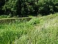 The Lagan Canal - geograph.org.uk - 1369183.jpg