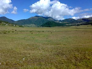 Department of Forests and Park Services of Bhutan - The vast area of marshland in Phobjikha which is a main winter habitat for the migratory Black-necked Cranes.