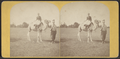The camel, from Robert N. Dennis collection of stereoscopic views 2.png