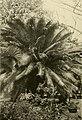 The ornamental trees of Hawaii (1917) (14579296399).jpg