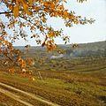 The surroundings of the village Capriana (1980). (26380967696).jpg