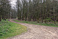 The track through the woods to Painslack Farm - geograph.org.uk - 775974.jpg