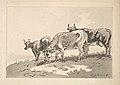 Three Cows Standing on the Ridge of a Field MET DP823322.jpg