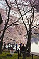 Tidal Basin was thick with cherry blossoms and photographers - 2013-04-09 (8635658996).jpg