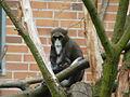 Tierpark 08 05 47a.jpg