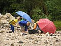 Til og med regn stopper ikke disse ivrige samlere.jpg