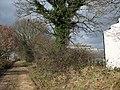 Track past Five Berries Farm - geograph.org.uk - 1203325.jpg