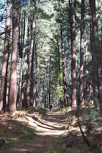 Pine mailbbox