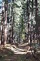 Trail up Pine Canyon.jpg