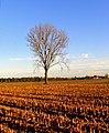 Tree^field - Flickr - Stiller Beobachter.jpg