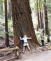 Tree Hugger MG 2121 crop.jpg