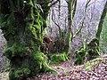 Trees, Sloughan Glen - geograph.org.uk - 1176742.jpg