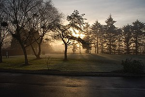 English: Trees, mist, and sun. The Blair, Auch...