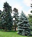 Trees - panoramio (4).jpg