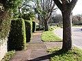 Trees and hedging, Brunel Road, Churston, Torbay - geograph.org.uk - 1225643.jpg
