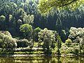 Trees by the Rvier Elbe - panoramio.jpg