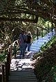 Tsitsikamma forest walk-wiki.jpg