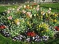 Tulipes Pensées Place du Louvre.jpg