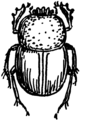 Tumble Bug (PSF).png