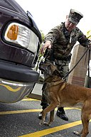 US Navy 040420-N-6477M-036 Master-at-Arms 2nd Class Rodney Ware and his partner Military Working Dog, Tessa, conduct random vehicle inspections
