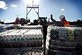 US Navy 100129-N-7918H-118 U.S. Navy Seabees assigned to Navy Cargo Battalion (NCHB) 1 and U.S. Army Soldiers assigned to the 97th Transportation Company load pallets of water.jpg