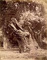Unbezeichnet (Baum).jpg