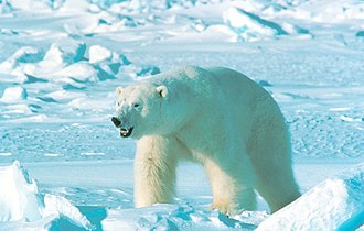 Great Arctic State Nature Reserve - The Great Arctic Nature Reserve is one of the largest wildernesses on earth