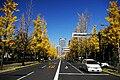 UtsuboPark-autumn03.jpg