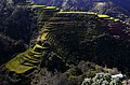 VIEW OF BANAUE RICE TERRACES.jpg