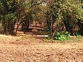 Van Vihar National Park pic1.jpg