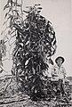 Vanilla culture in Puerto Rico (1948) (20543547636).jpg