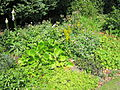 Various plants at The Arno rose garden, Oxton - IMG 0907.JPG