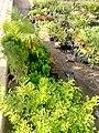 Ventes de fleurs 05.jpg