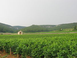 Vineyards in Gevrey-Chambertin