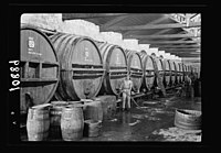 Vintage activities at Richon-le-Zion, Aug. 1939. Row of large wine barrels being filled with new wine (fermentation rooms) LOC matpc.19787.jpg