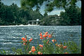 Voyageurs National Park VOYA9528.jpg